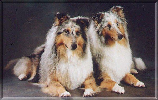 Vackra Myzco och Zheila